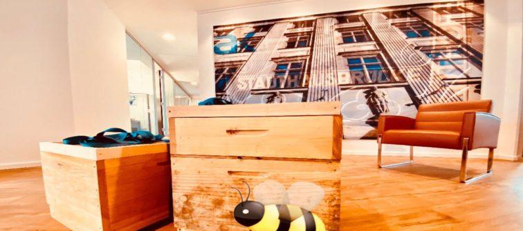 Welcome on board: Die Bienen ziehen ein!